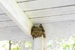 otter-lake-birds-nest